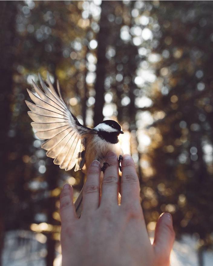 动物摄影:来自野生动物的光圈和诱惑