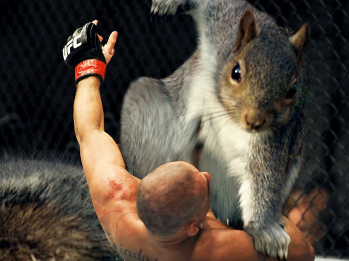 一只松鼠引发的Photoshop战斗:第一回合